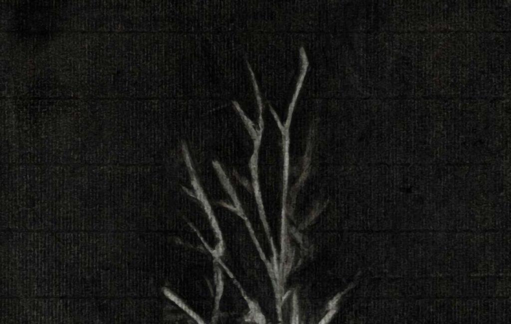 Estudio alto contraste, árbol 1